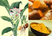 turmeric_food_use2.jpg